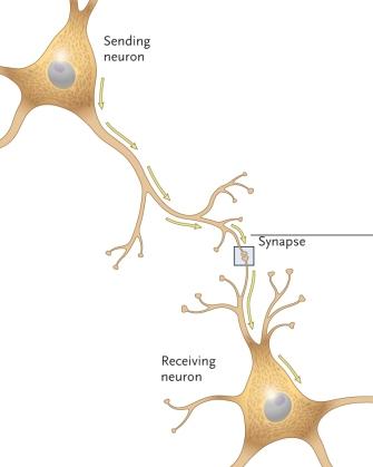 Generic_Neurotransmitter_System
